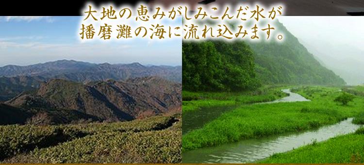 大地の恵みがしみこんだ水が播磨の海に流れ込みます。